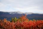 Cerisiers en automne Vaucluse