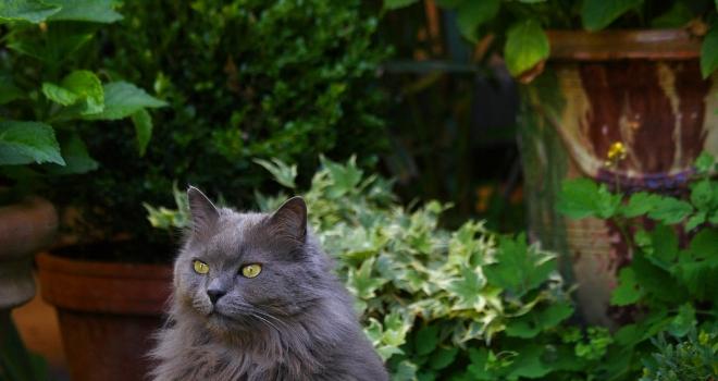 Chat dans un jardin