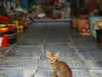 Chat Djerba