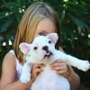 Fillette jouant avec un chien