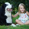 Fillette assise avec un chien
