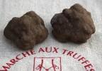 Truffe noire melanosporum
