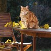 Chat sur une table