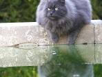 Chat au bord d'une piscine