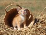 chaton dans un panier 2