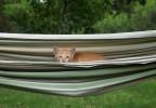 chaton dans un hamac