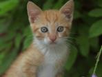 chaton assis