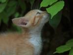 chaton et feuille