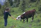Jeune fille et vache