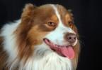 chien studio 4