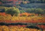 le vaucluse en automne