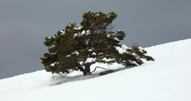 arbre au mont ventoux