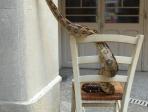 boa et chaise