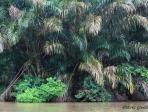 Costa Rica 25