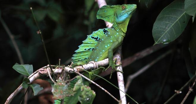 Costa Rica 30