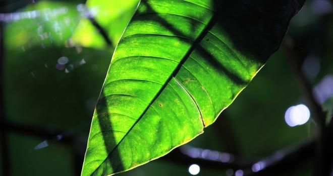 Costa Rica 39