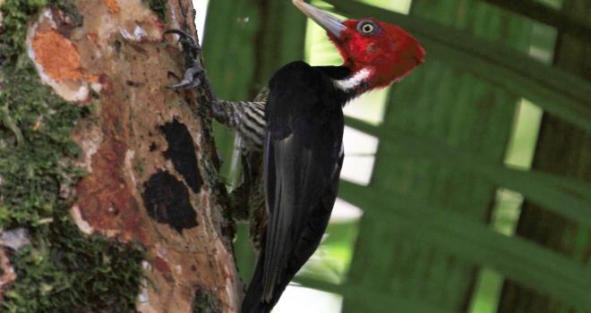Costa Rica 40