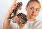 Python royal 1