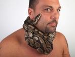 Python royal 4