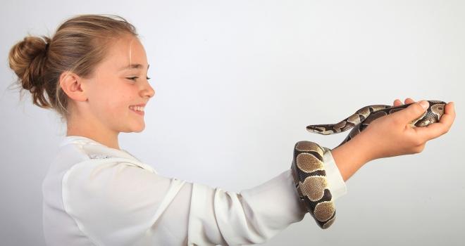 Python royal 5