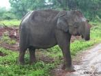 Sri Lanka 11