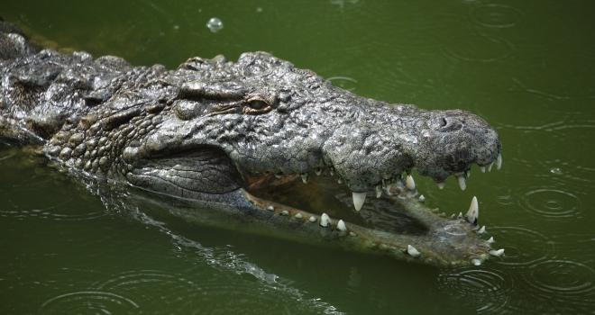 Ferme aux crocodiles  Djerba