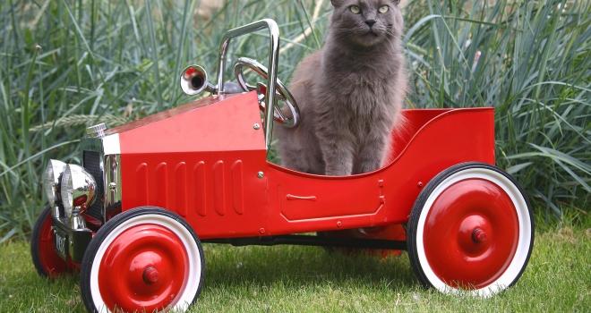 Chat dans une voiture d'enfant