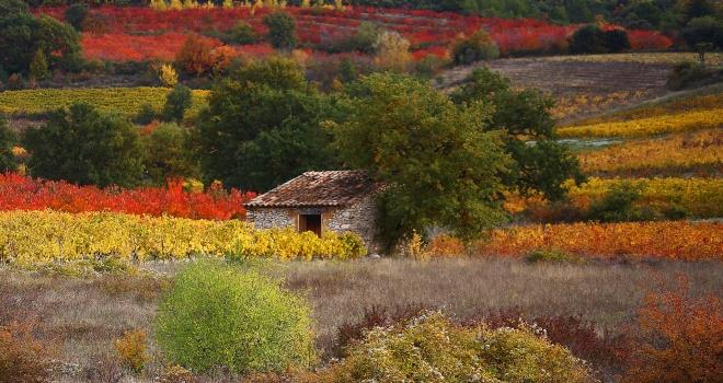 Paysage d'automne Vaucluse