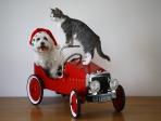 Chien et chat dans une voiture d'enfant