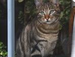 Chat derrière une fenêtre