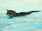 chat dans une piscine