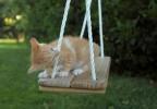 chaton sur une balançoire