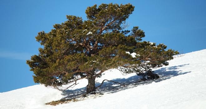 Mont Ventoux hiver 2