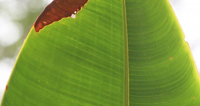 Costa Rica 36