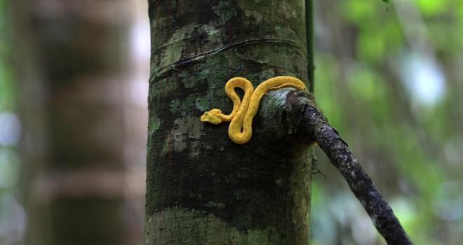 Costa Rica 52