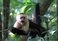 Costa Rica 90