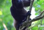 Costa Rica 97