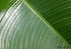 Costa Rica 7